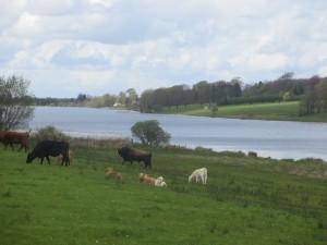 Loughglynn Lake